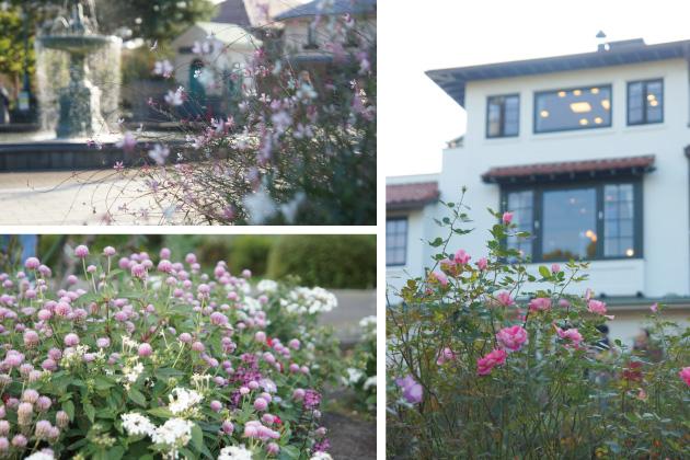 横浜山手 バラとカスケードの庭