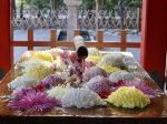秋の鎌倉 鶴岡八幡宮 菊の花手水
