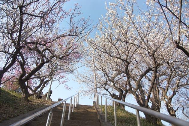 隠れた梅の名所 東方天満宮
