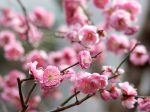 春の鎌倉 収玄寺