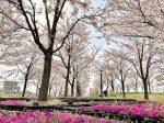 さくら広場(茅ヶ崎)建築家安藤忠雄氏の設計による美しい公園