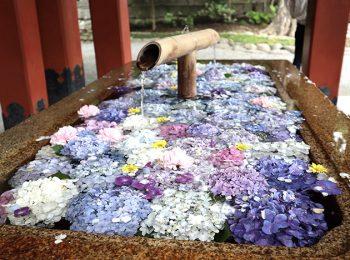鶴岡八幡宮の花手水